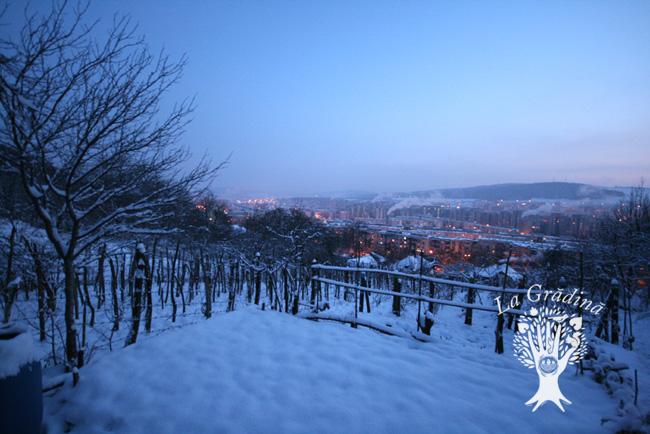 garden_winter_logo.jpg